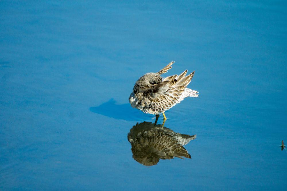 Photo in Animal #bird #reflection #animal #water #pond