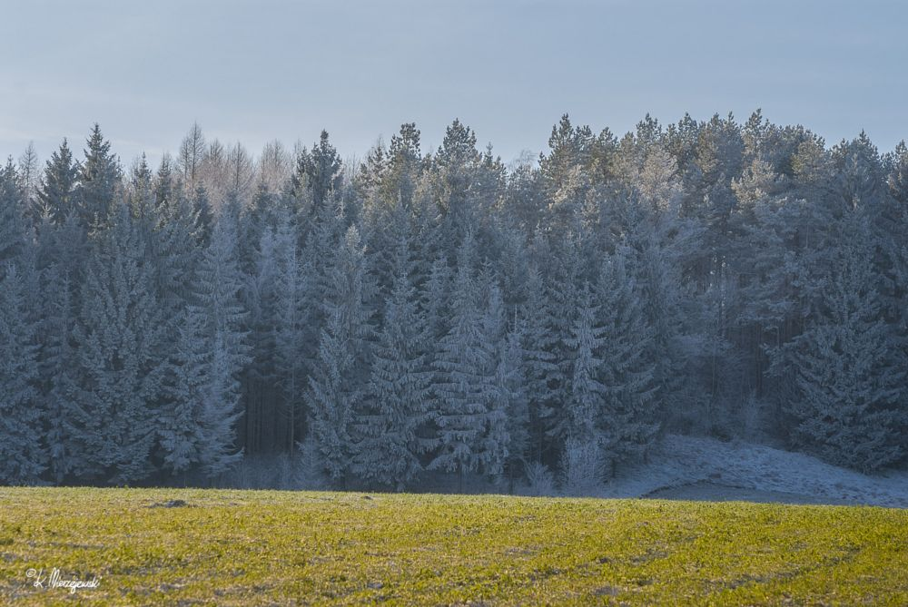 Photo in Landscape #winter #forest