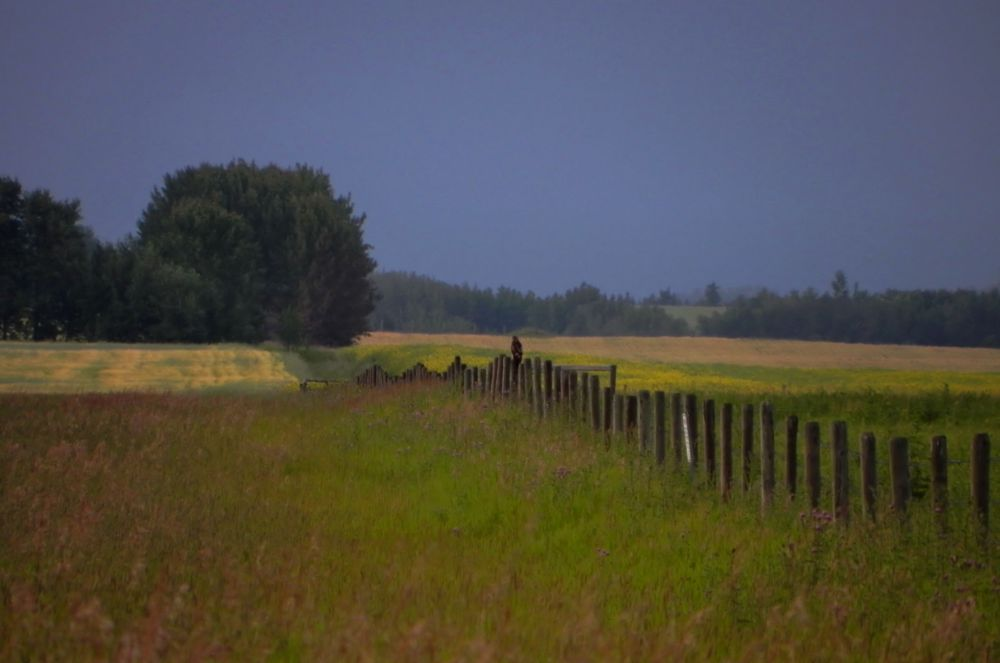 Photo in Landscape #hawk #bird #fence #country #fields
