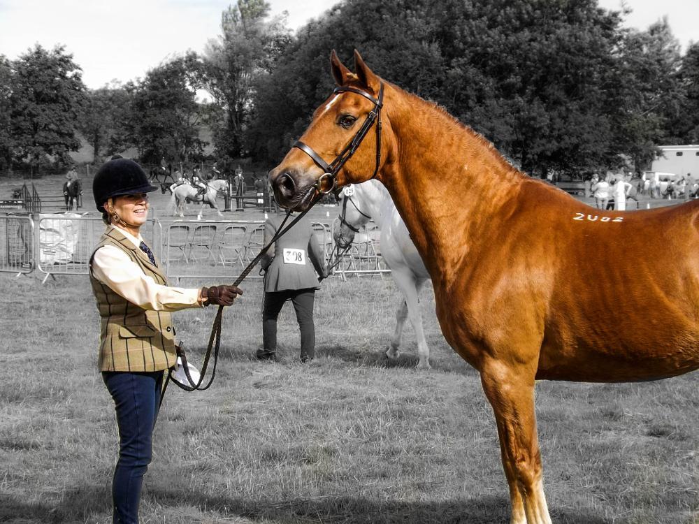 Photo in Animal #winners #winningtheirclass