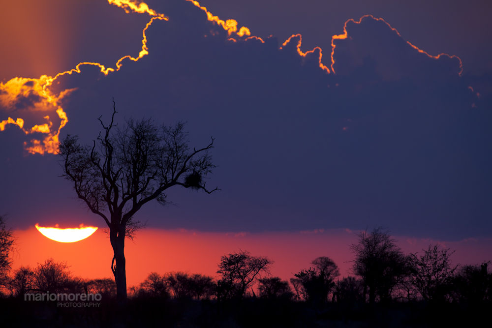 Photo in Landscape #ypa2013 #nature #dramatic #sunset #sunrise #big #sky #africa #south #african #kruger #silhouette #tree #mario moreno #national #park #safari #cape #images