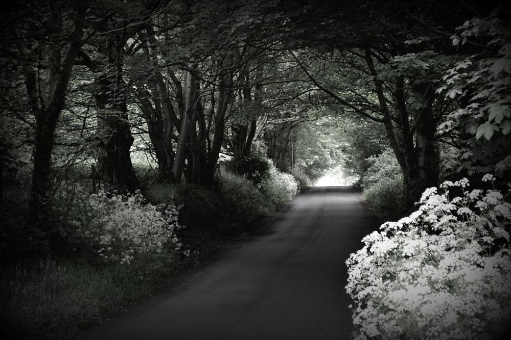 Photo in Random #country #road #lane #subdued #mood
