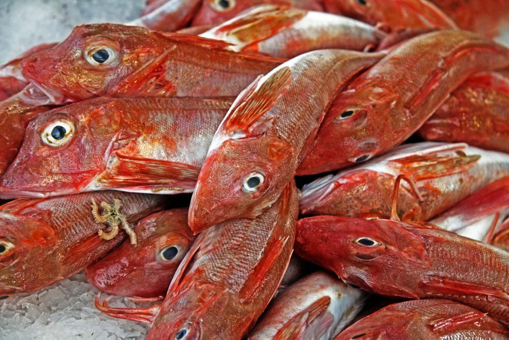 Photo in Food #fish #food #market
