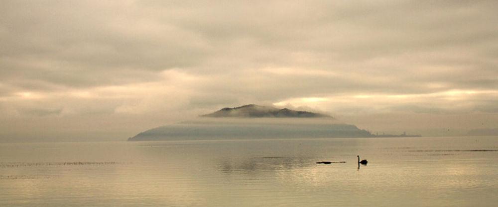 Photo in Random #mokoia #island #lake #rotorua #new zealand #photographer #mist #winter #season #black #swan #grey #landscape #photography #igallopfree #stallion