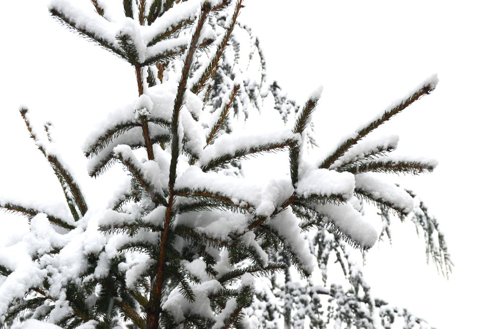 Photo in Nature #snow #winter #cold #heavy #photography #nikon #snowing #white #freezing