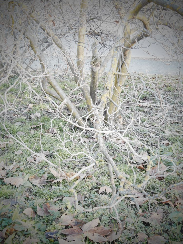 Photo in Random #tree #bare #branches #winter #park