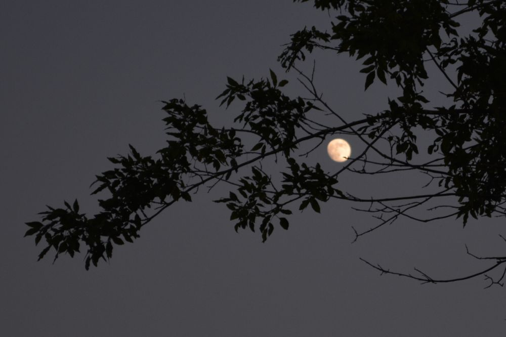 Photo in Portrait #nature #trees #moon #nikon d5200 #lockport ny #niagara county ny