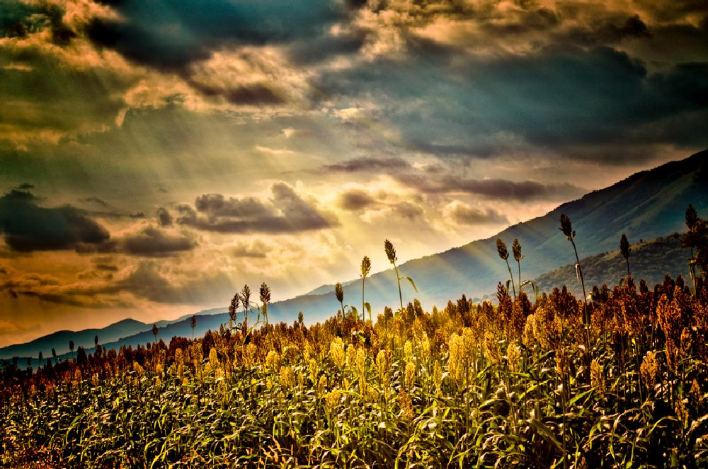 Photo in Landscape #flowers #clouds #sky #mountains #sunset