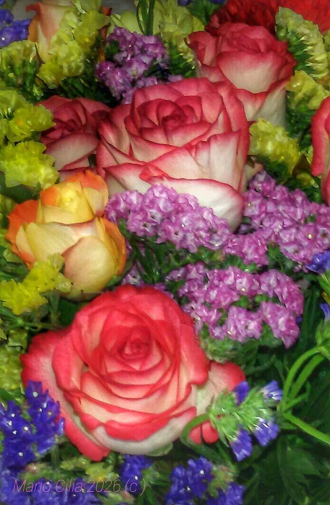 Photo in Random #flowers #colors