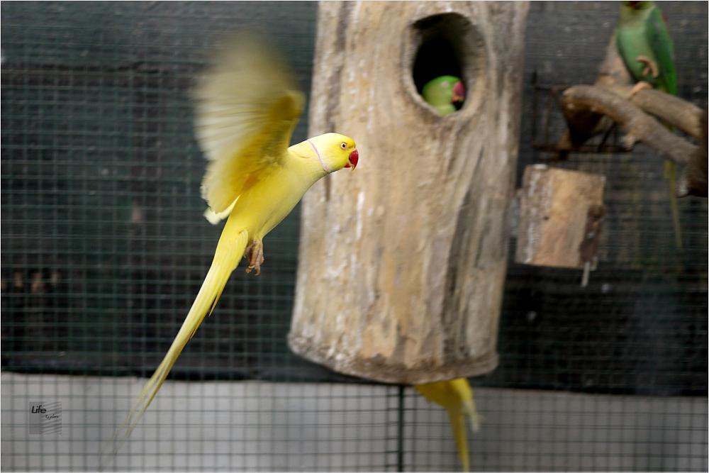 Photo in Random #bird
