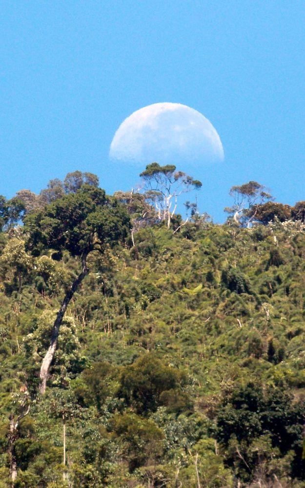 Photo in Nature #nature #sky #trees #rebioararas