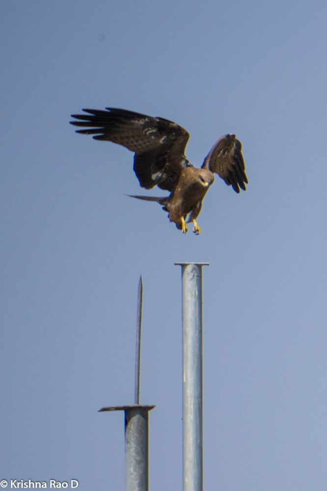 Photo in Nature #eagle #bird #nature