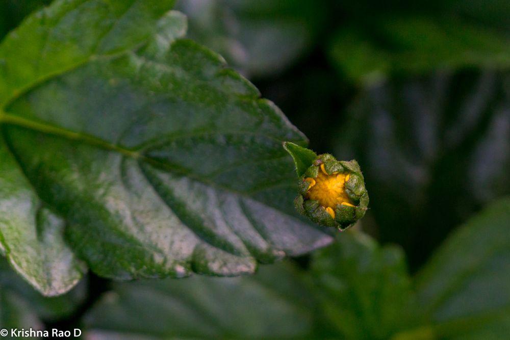 Photo in Nature #beautiful #flower #flora #bud #garden #beauty #nature