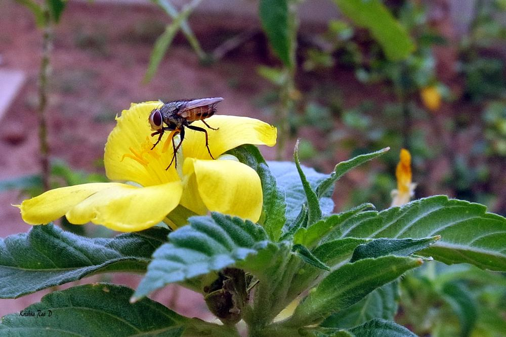 Photo in Animal #fly #insect #nature