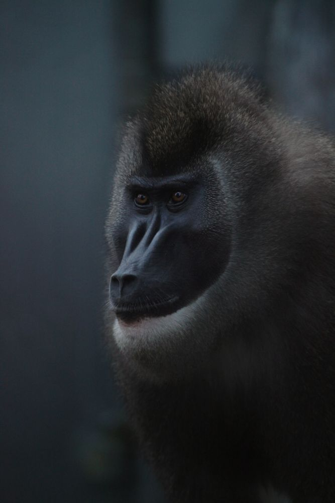 Photo in Animal #animal captive bristol zoo mon