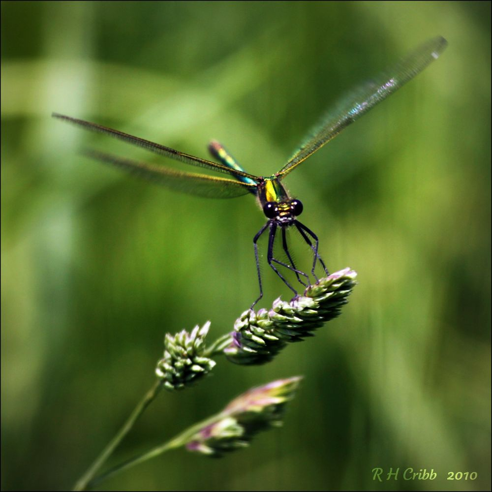 Photo in Nature #insect fly damsel green wildli