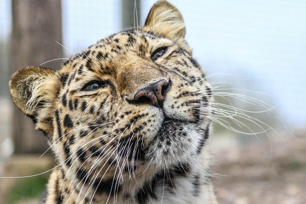 Photo in Animal #leopard #big cat #nature #mammal #garry chisholm