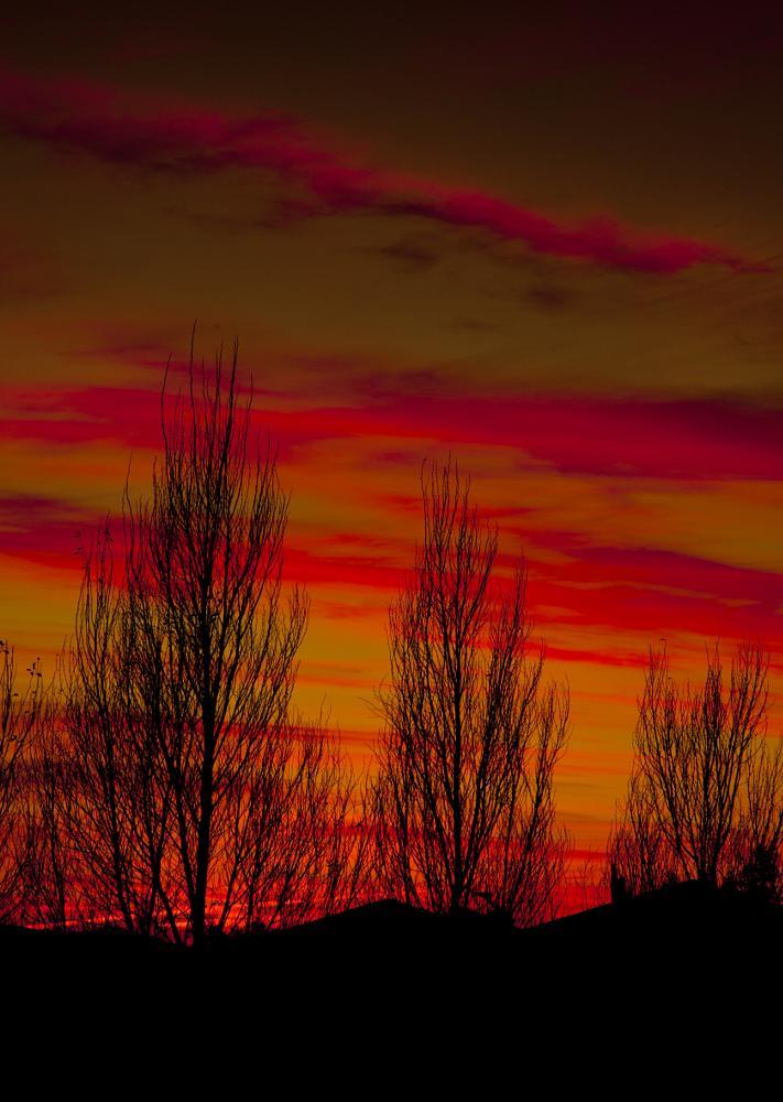 Photo in Landscape #sunrise #color #silhouette #trees #winter #orange #red