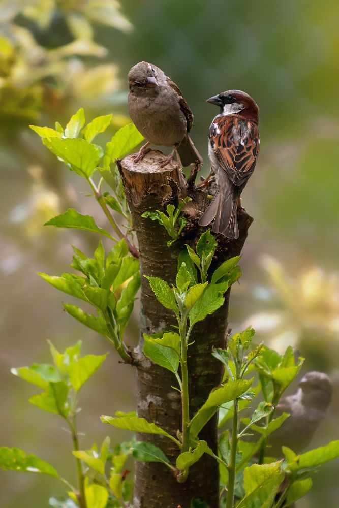 Photo in Animal #birds #garden #chat #perched #apple tree