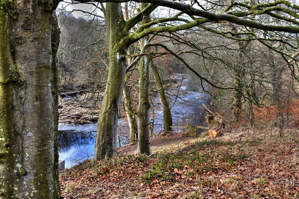 Photo in HDRI #river ayr #walk #path #riverside #trees #water #annbank