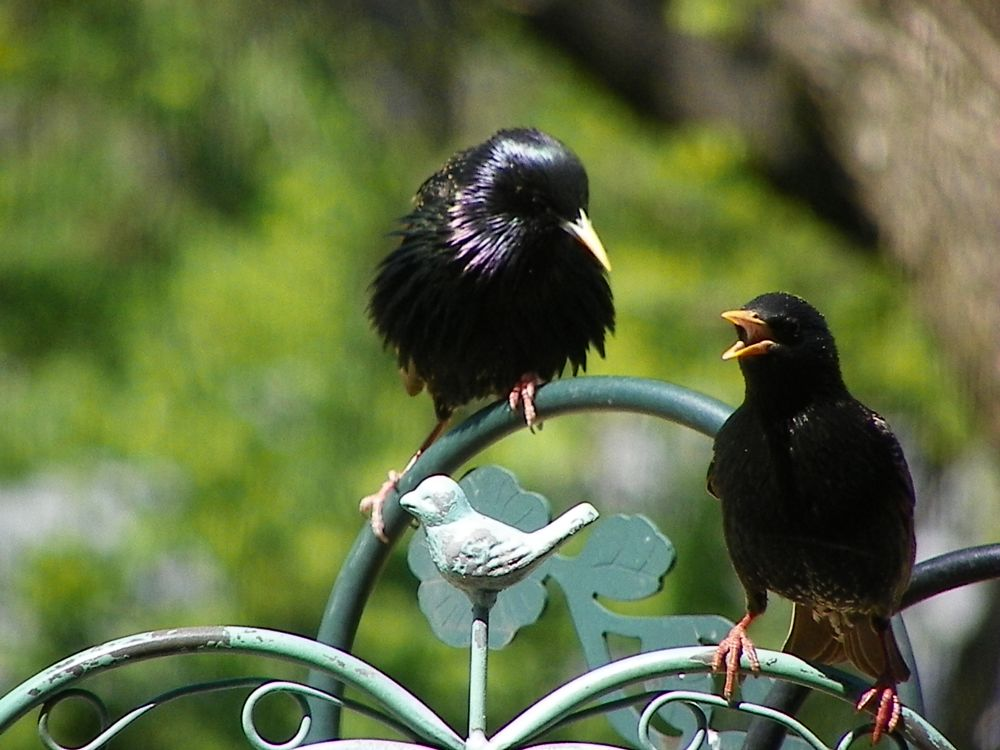 Photo in Animal #animals #birds #european starlings #beaks #feathers #feet