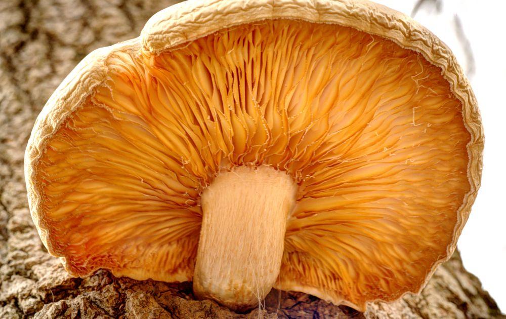 Photo in Nature #mushroom #tree #stem