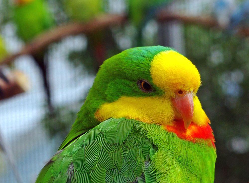 Photo in Animal #tropical bird