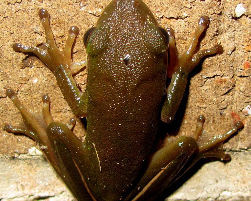 Photo in Macro #frog #macro #stone wall