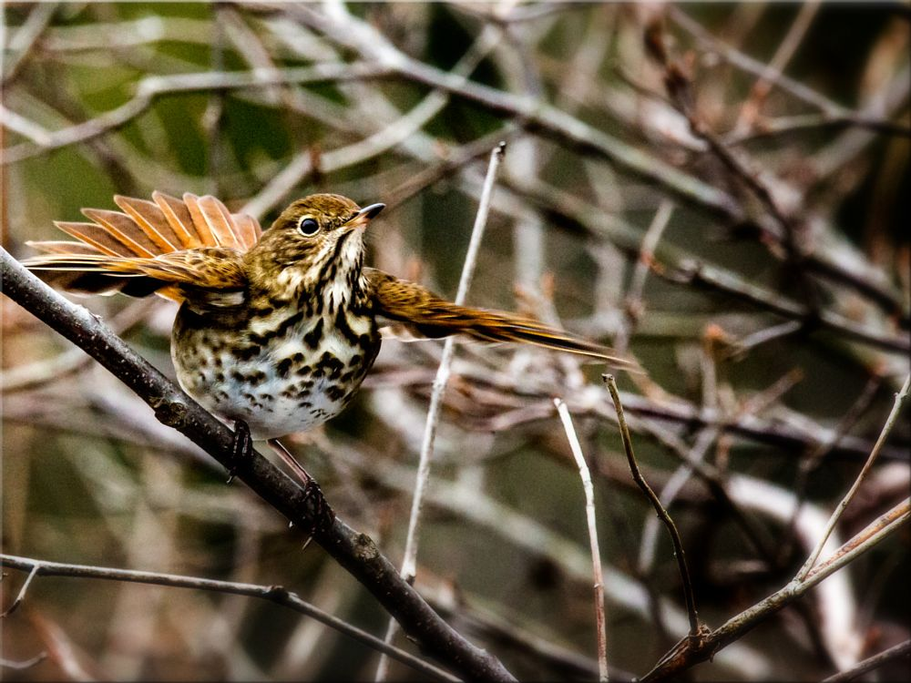 Photo in Animal #birds in motion #birds in flight #avian art #avian photography #birds as art #bird photography #wildlife #nature #outdoors