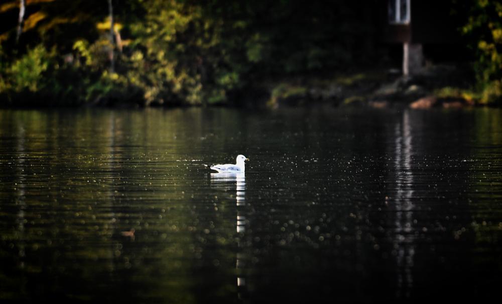 Photo in Nature #seagull #bird #nature #animal #nikon #d4 #300mm
