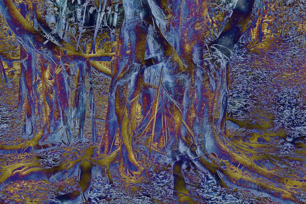 Photo in Abstract #tree root #abstract