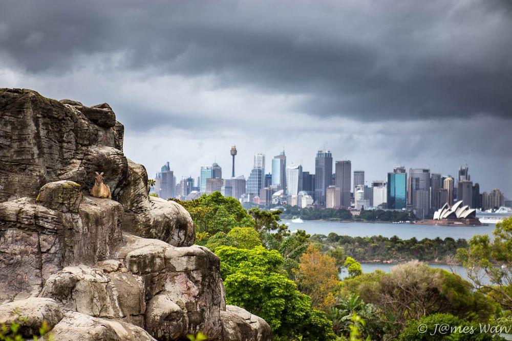 Photo in Cityscape #sydney #taronga zoo #zoo #tahr #animal #city skyline #opera house #nature vs city