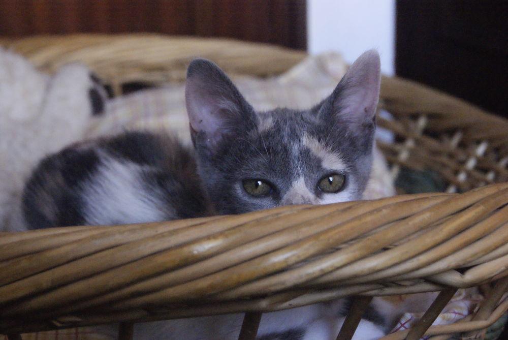 Photo in Animal #grace #kitty #cat #animal #cute