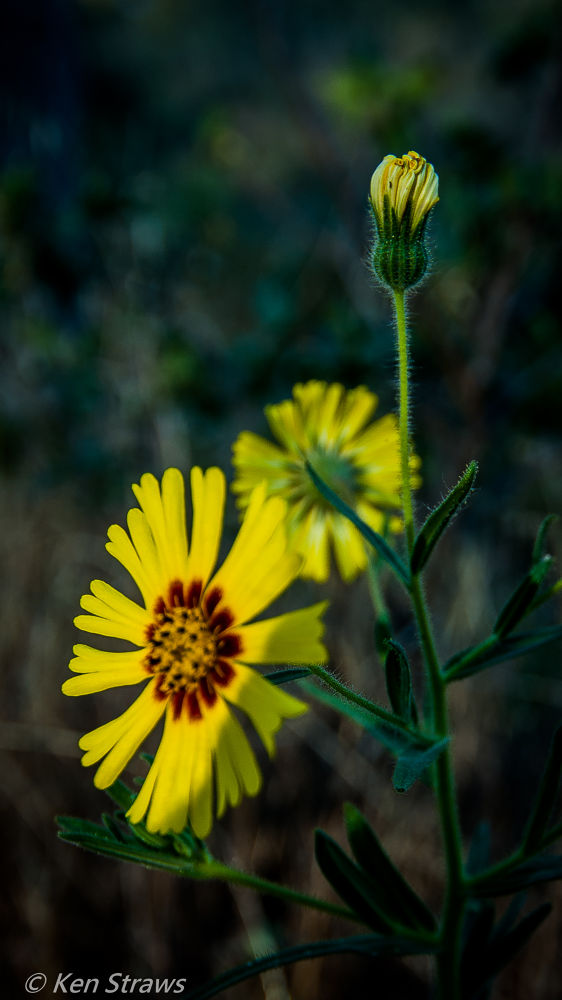 Photo in Nature #wild flowers #flowers