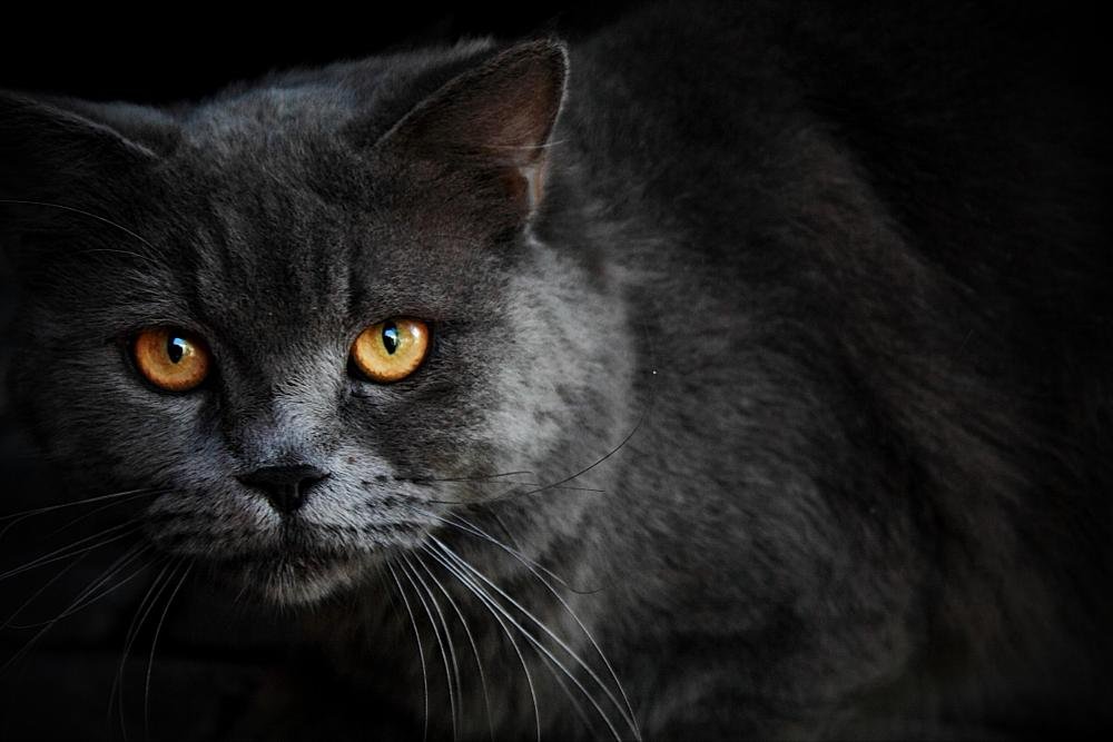 Photo in Animal #cat #animal #close up #nature