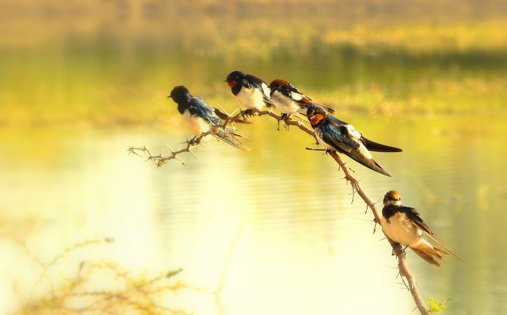 Photo in Nature #birds #nature #india #colors