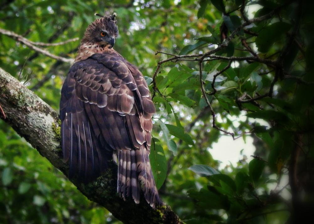 Photo in Nature #bird #india #kerala #nature #eagle