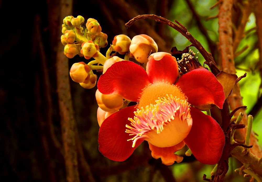 Photo in Nature #flower #innian #colors #yellow #red #pink #nature