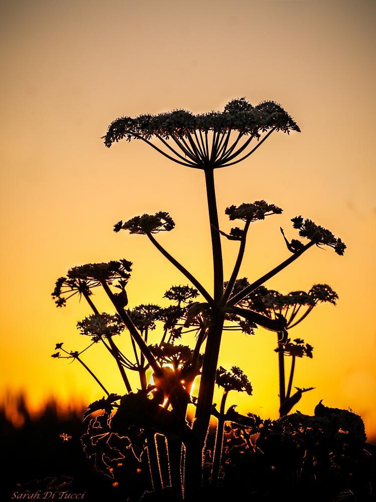 Photo in Nature #sun #nature #yellow