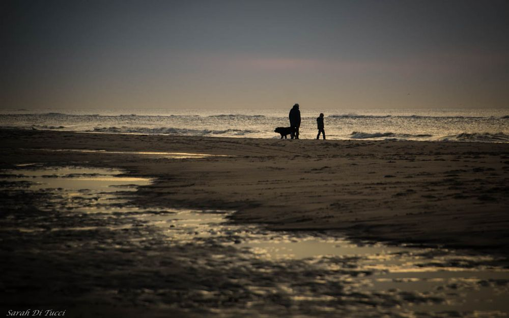 Photo in Random #beach #sea #people #dog