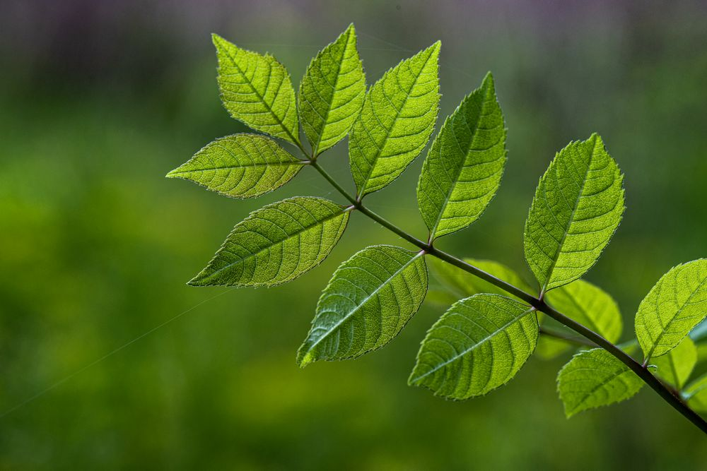 Photo in Nature #close up #leafs #green