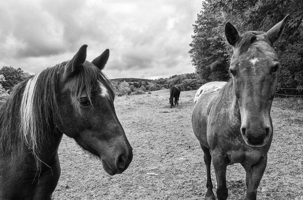 Photo in Animal #trio #three #animal #horses