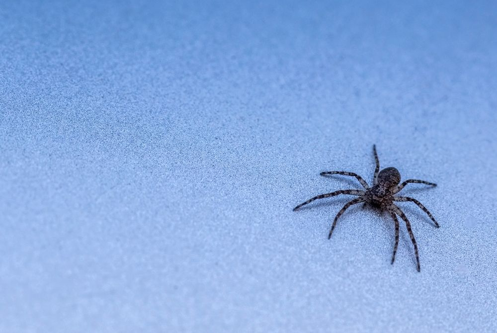 Photo in Macro #macro #spider #small spider