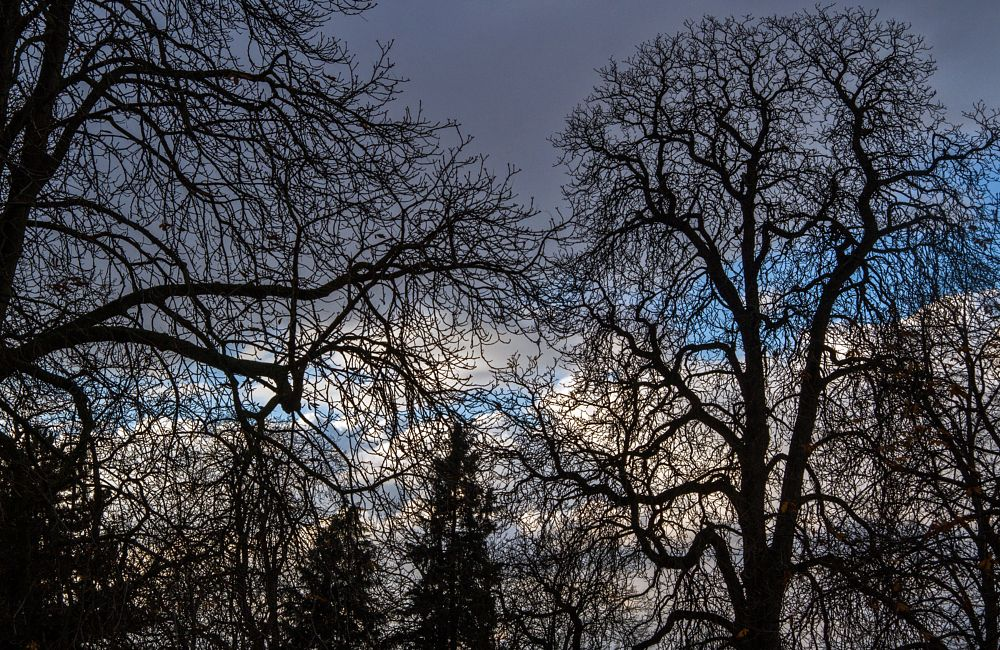 Photo in Nature #nature #treees #clouds #silhouettes