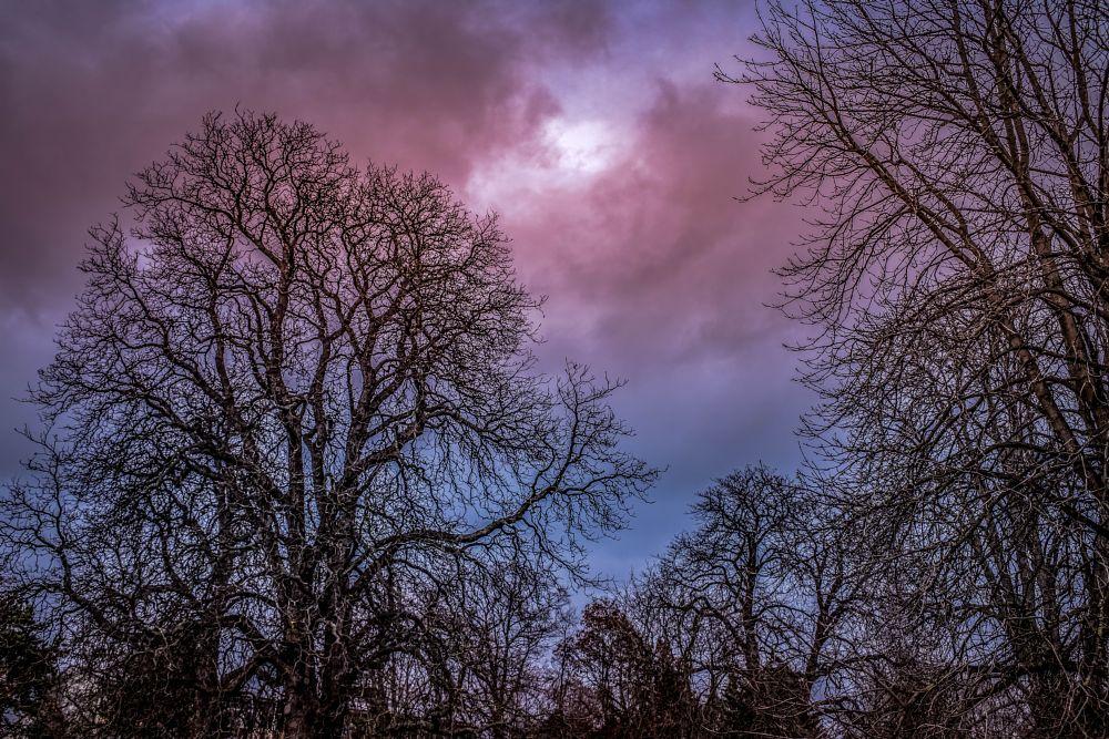 Photo in Random #nature #trees #sky #clouds #creativ