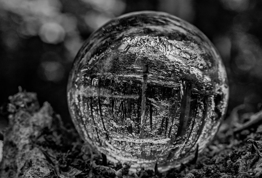 Photo in Random #glass #bowl #forest