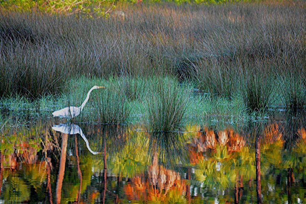 Photo in Random #egret #colors #painting