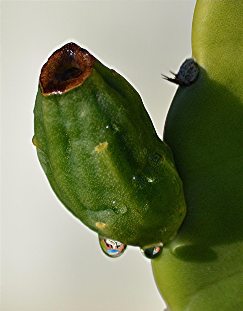 Photo in Random #drop #droplet #water #cactus