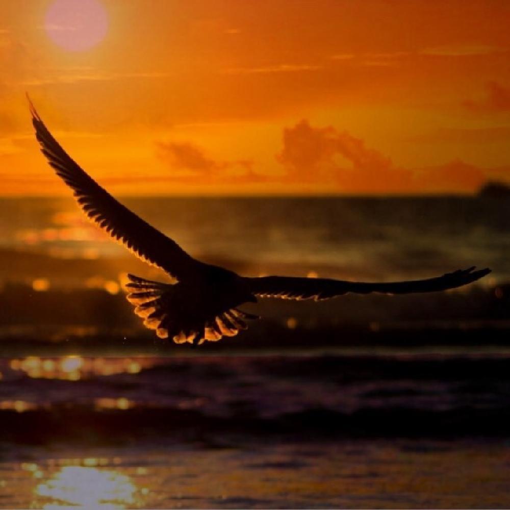 Photo in Landscape #bird #flight #over the sea