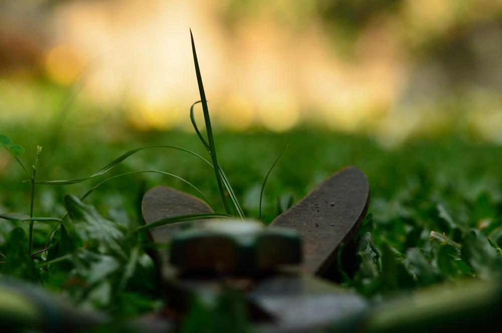 Photo in Nature #grass #nature #macro